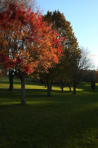 Träd vid hål 7 Östra, 25 oktober 2015